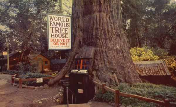 Famous Tree Houses world famous tree house redwoods, ca