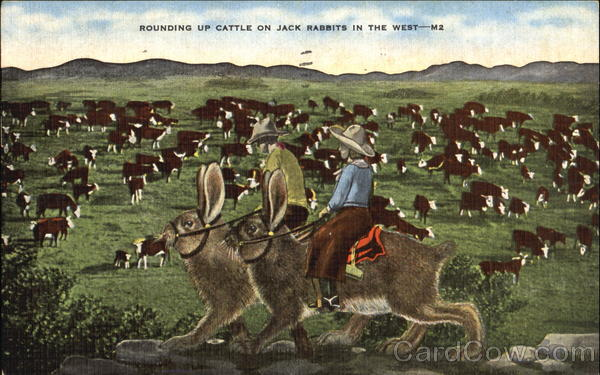 Rounding Up Cattle On Jack Rabbit In The West Exaggeration