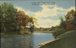 Des Plaines River Scene In The Beautiful Forest Preserves Postcard