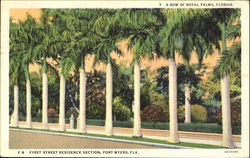 A Row Of Royal Palms