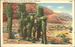 Joshua Cactus Trees In Red Rock Canyon