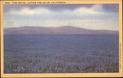 The Royal Lupine Fields Of California