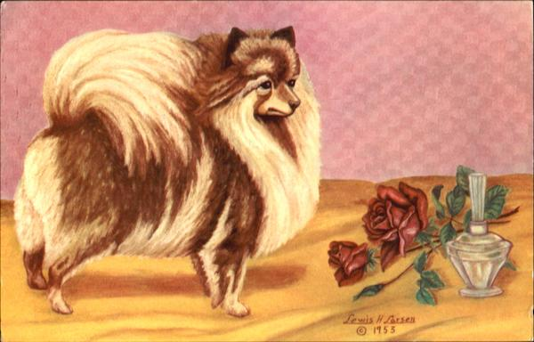 The Pomeranian Dogs