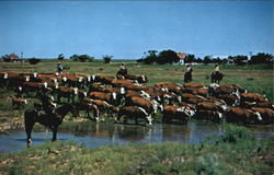 West Texas Ranch Rounup