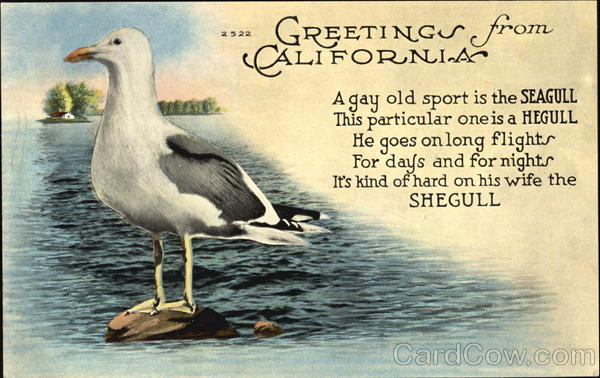 Greetings From California Seagull Birds