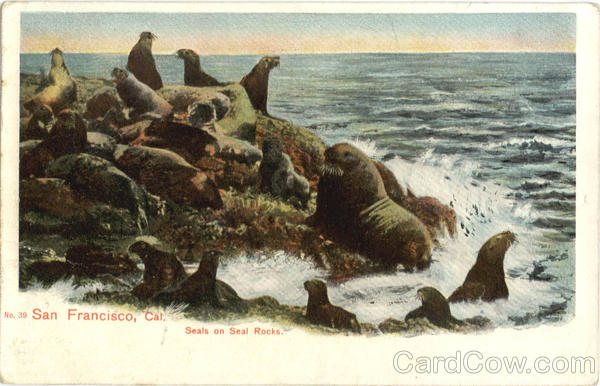 Seals on Seal Rocks San Francisco California