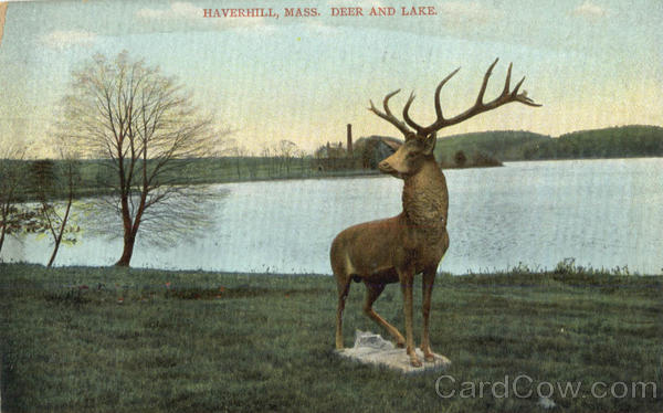 Deer And Lake Haverhill Massachusetts