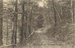 Forrey's Woods
