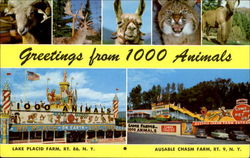 Greetings From 1000 Animals
