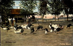 Poultry Ranch