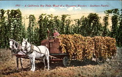 A California Hop Field
