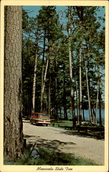 Minnesota State Tree Postcard