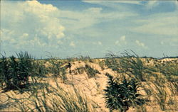 The Sand Dunes Along The Coasts Of Maryland