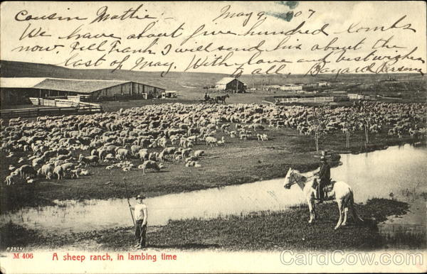 A Sheep Ranch In Lambing Time Cowboy Western