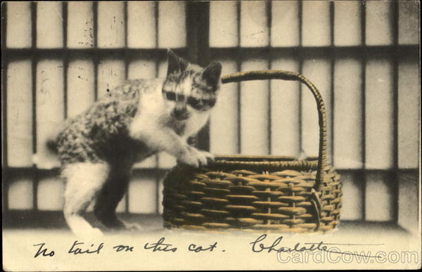 Kitten with Basket - Tinted Cats