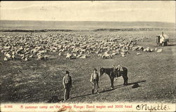 A Summer Camp On The Sheep Range