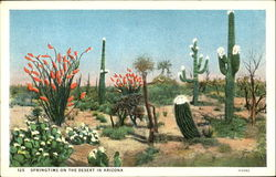 Springtime On The Desert In Arizona