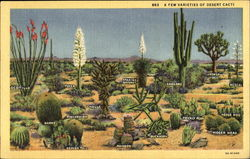 A Few Varieties Of Desert Cacti