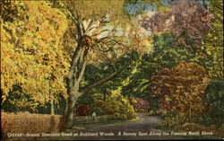 Scenic Sheridan Road At Hubbard Woods Postcard