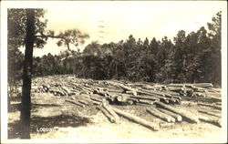 Logging in East Texas