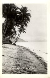 A Beach In New Guinea