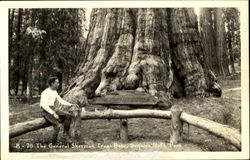 The General Sherman Tree Base