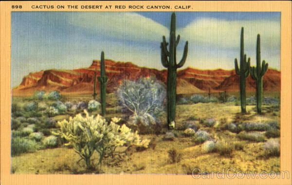 Cactus N The Desert Red Rock Canyon California