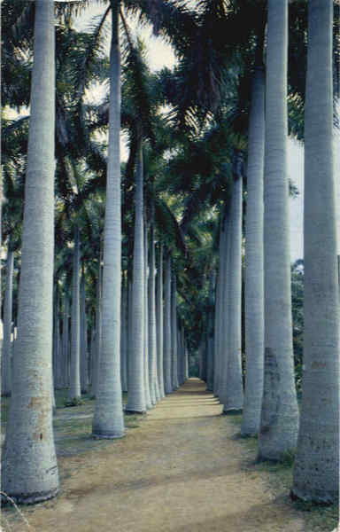 Stately Royal Palms Vero Beach Florida