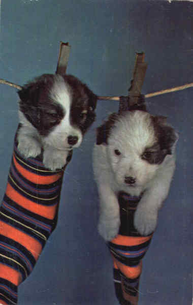Cute Puppies in Stockings on Clothesline Dogs