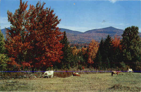 Vermont Mountains & Cows Scenic