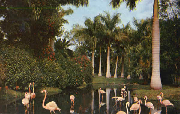 Royal Palm trees and Flamingos Birds