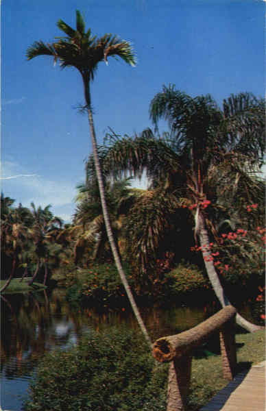 Tropical Florida Scenic