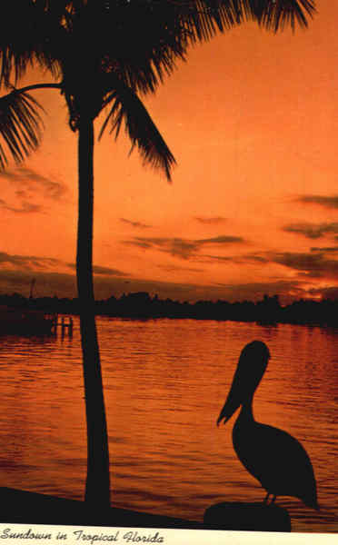 Palm Silhouette At Sundown In Tropical Florida Scenic