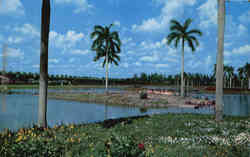 Flamingo Island at South End of Infield Lake, Hialeah Race Course