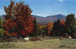 Vermont Mountains & Cows