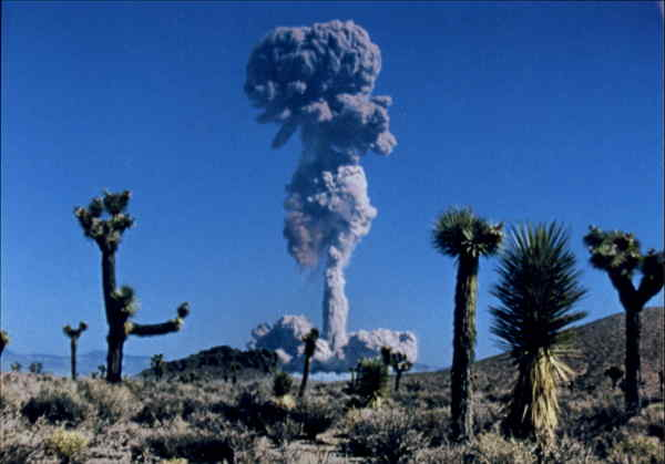 Desert Bloom At the Nevada Test Site Military