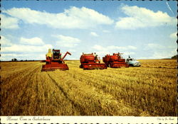Harvest In Saskatchewan Postcard
