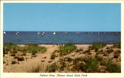 Nature Area, Illinois Beach State Park Postcard