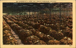 Interior Of A Loose Leaf Tobacco Warehouse