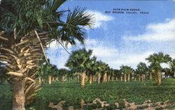 Date Palm Grove