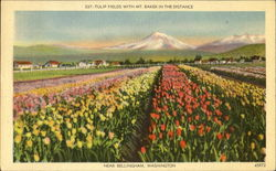 Tulip Fields With Mt. Baker In The Distance