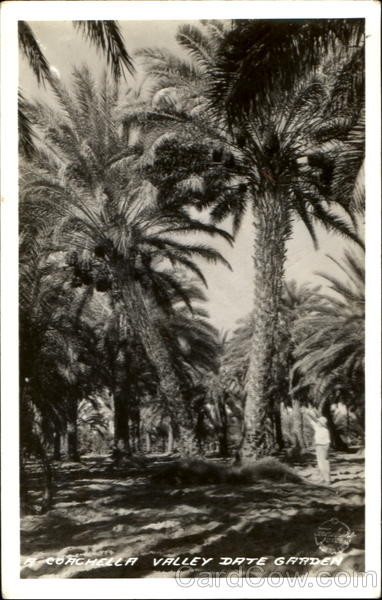 Coachella Valley Date Garden Trees