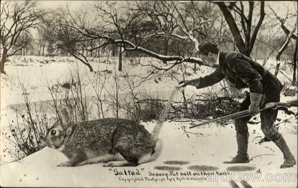Salted Rabbit Hunter Exaggeration Hunting
