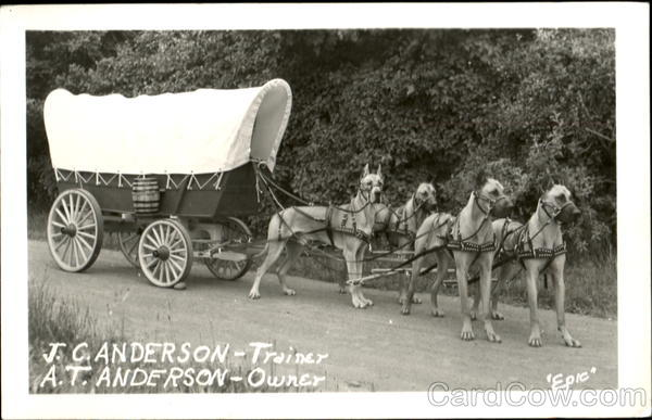 Covered Wagon Dog Team Dogs