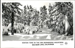 Winter Time In The San Bernardino Mountains