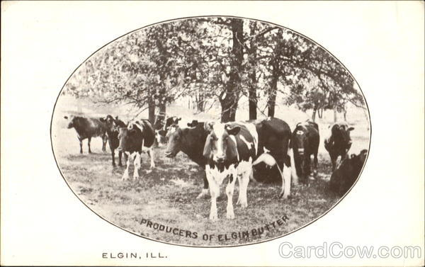 Producers Of Elgin Butter Illinois