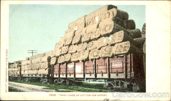 Train Loads Of Cotton For Export Trains, Railroad