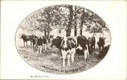 Producers Of Elgin Butter