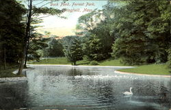 Duck Pond, Forest Park