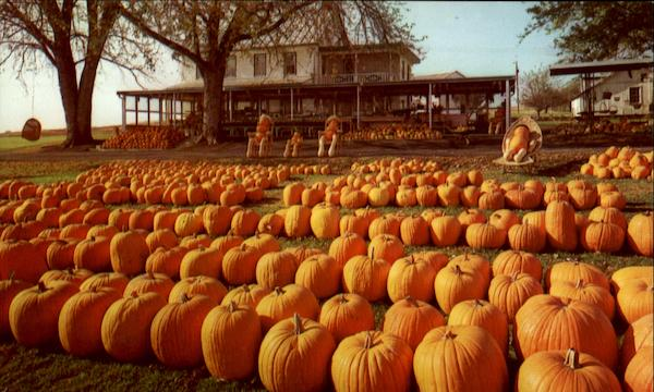 Dutch Farm Market Pumpkins Reamstown Pennsylvania